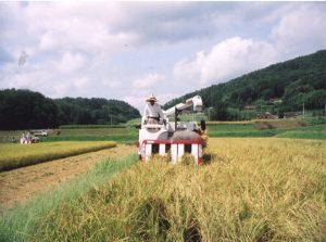 9.賀茂プロジェクト稲刈り