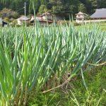 なかま農園4