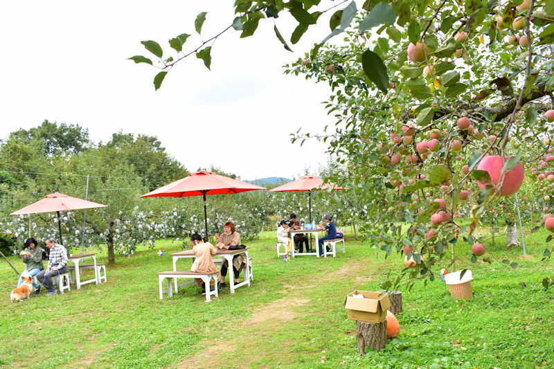 6.リンゴ園カフェスペース