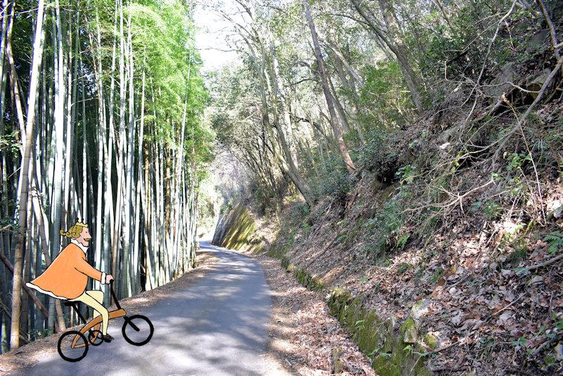 菊田農園竹林